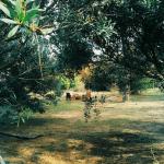 Parque Casa Blanca Villa Gesell Argentina Camping Casablanca Buenos Aires